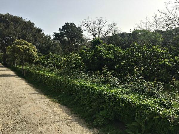 busket gardens malta