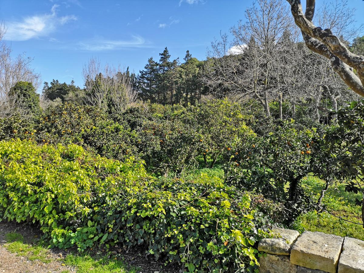 buskett gardens malta