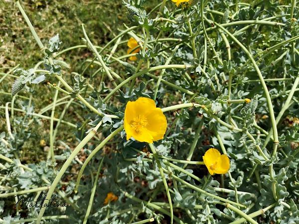 valletta ditch flowers