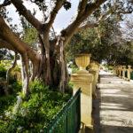 argotti botanic gardens floriana malta