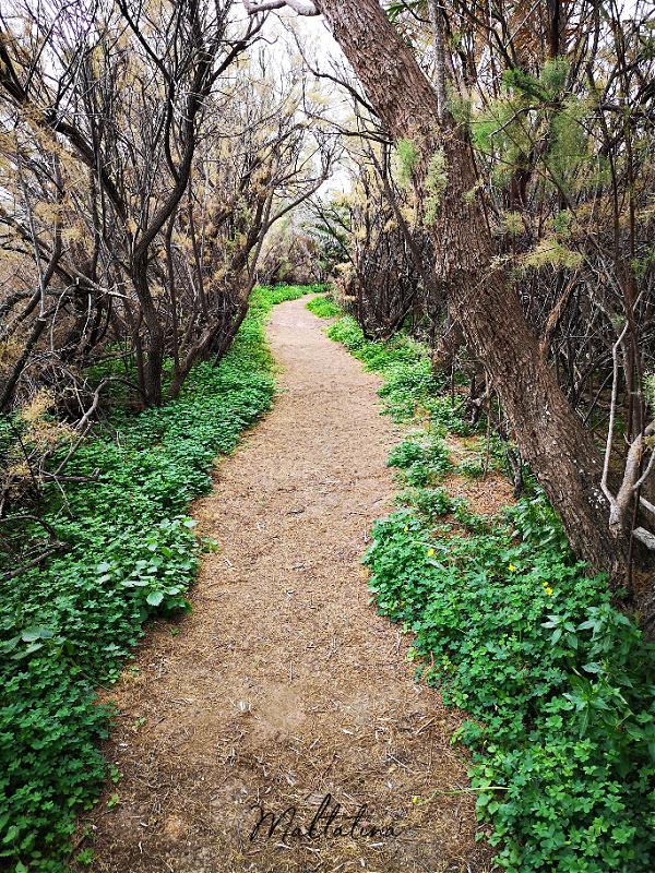ghadira nature reserve mellieha